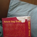 How I became a dog trainer AND a people trainer (You CAN teach an old dog new tricks)
