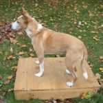 Dog Training:  Part One of Teaching Your Dog to Sit, Lie Down, and Stay - On the Box!