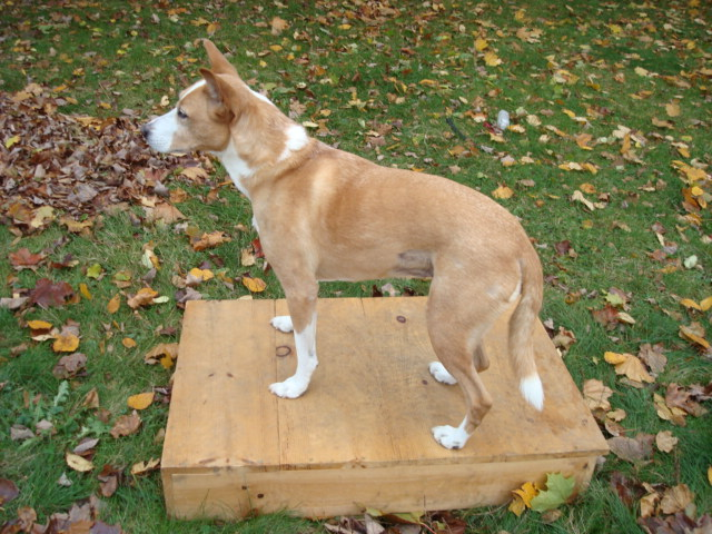 Familiarize Your Dog With Commands Given While You Re Standing Sitting Kneeling And Lying Down Teach To Perform In Front Of