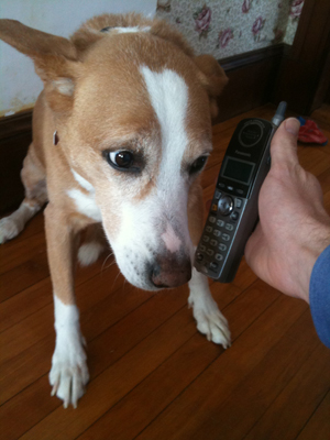 Dog Answers Phone