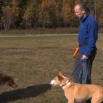 What To Do When YOUR Dog Is Aggressive in Four Steps