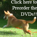 Nola jumps for joy at the thought of Natural Dog Training Videos