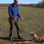 Another Natural Dog Training DVD update