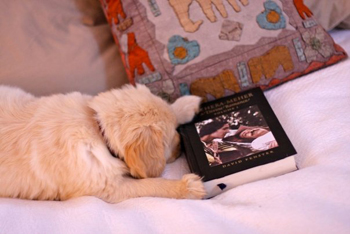 puppy reading about meher baba